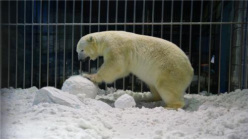 Harbin Polar Museum