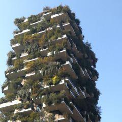 垂直森林用戶圖片