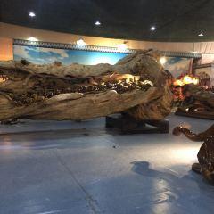 騰沖杜鵑王古木博覽園用戶圖片