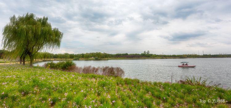 金倉湖公園2