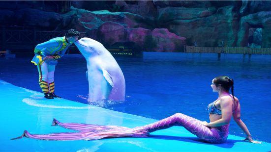海豚灣戀歌