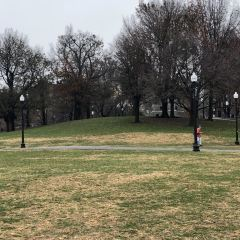 Boston Common User Photo