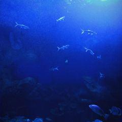 南寧融晟極地海洋世界用戶圖片