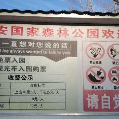興安森林公園用戶圖片