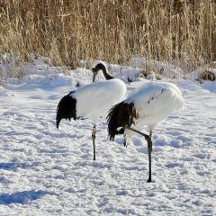 Kushiro Tancho Nature Park User Photo