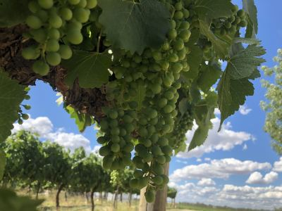 Grove Estate Wines