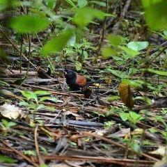 Tiritiri Matangi Island User Photo