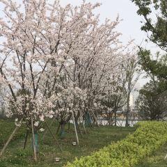 Aozidi Forest Park User Photo
