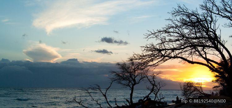 하와이 네이쳐 센터3