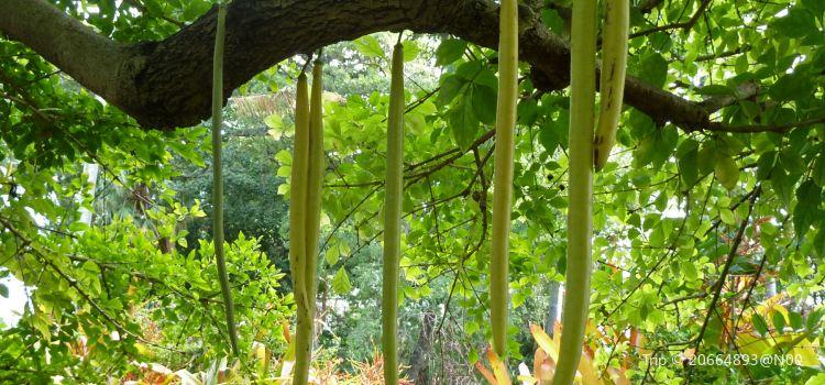 Foster Botanical Garden1