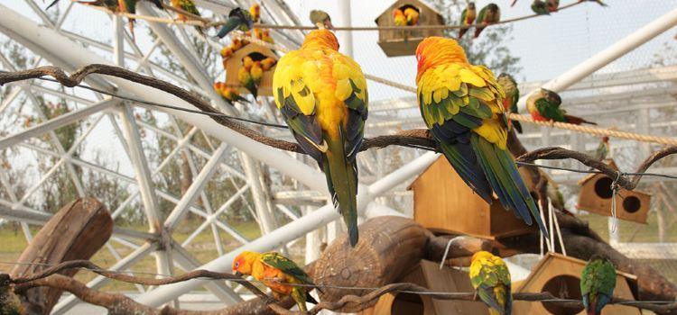 太陽錐尾鸚鵡展區3