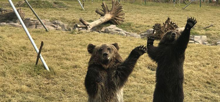 西伯利亞棕熊展區