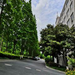 Prince Edward Road / Nullah Road Garden User Photo