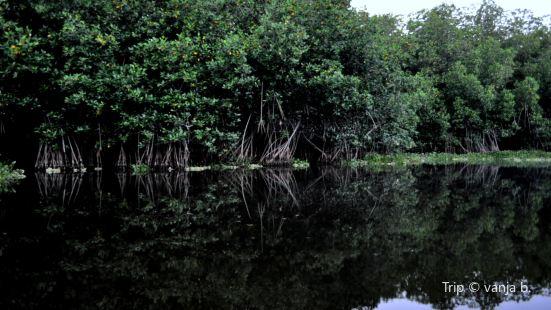 Mangroves, Monterrico Guatemala
