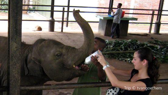 Elephant Transit Home (ETH)