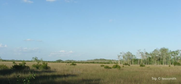 Everglades City Airboat Tours Travel Guidebook Must Visit
