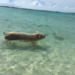 Pig Beach User Photo