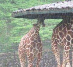 Asa Zoo User Photo