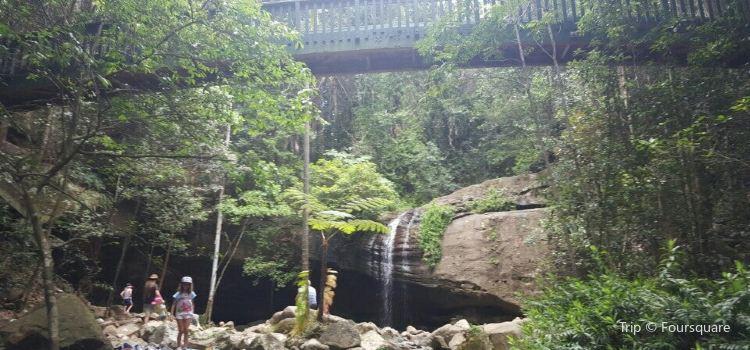 Buderim Forest Park1