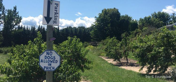 Buchan's Blueberry Hill1