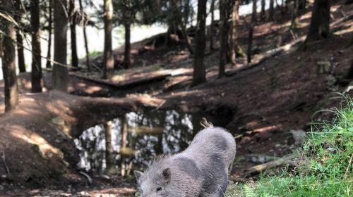 Wildpark Assling