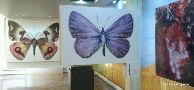 Museo Regional de la Araucania3