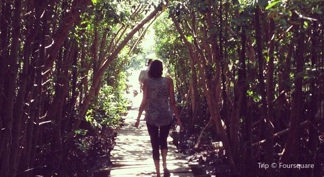 Beachwood Mangroves Nature Reserve1