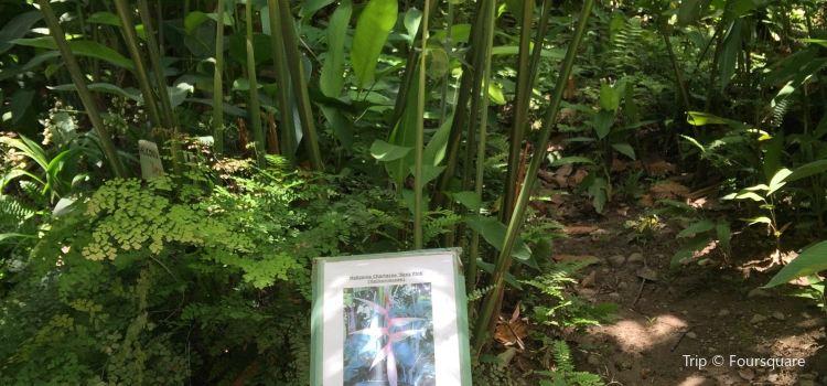 Diamond Falls Botanical Gardens1