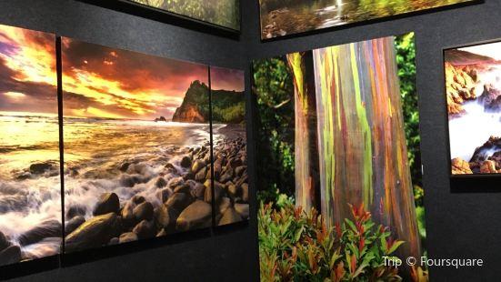 Wys Galleries