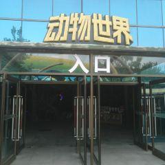 Dongwu World User Photo