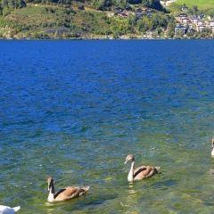 Lake Zell User Photo