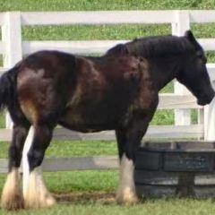 肯塔基賽馬公園用戶圖片