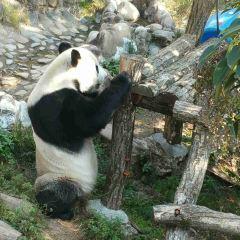 Huangshan Panda Ecological Paradise 여행 사진