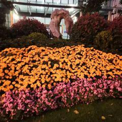 Honglingjin Park Botany Viewing Area User Photo