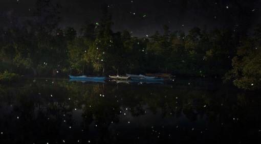 螢火蟲夜遊