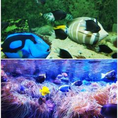 悉尼水族館用戶圖片