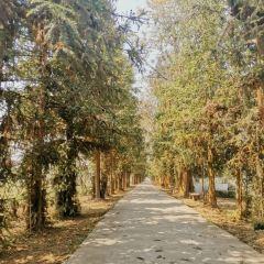 Dayi Manor User Photo
