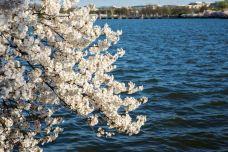 潮汐湖-华盛顿-小鱼儿2015