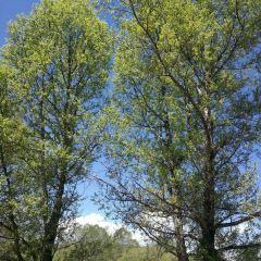 合作森林公園用戶圖片