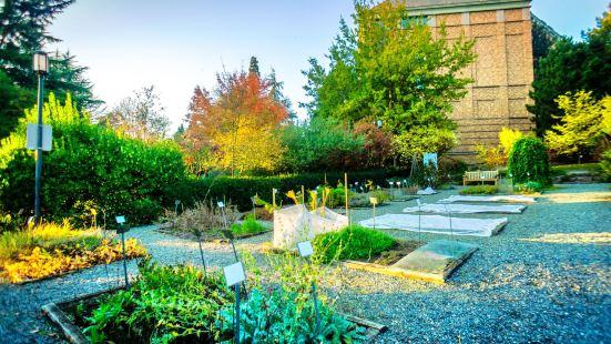 University of Washington Medicinal Herb Garden