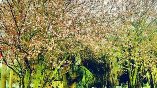Chenzhou Nanling Botanical Garden