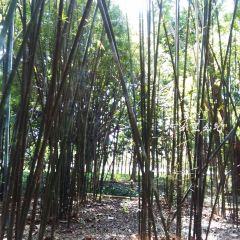 Shenzhen Mangrove Nature Reserve User Photo