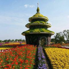 Marco Polo Flower World User Photo