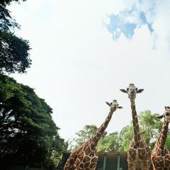 National Zoological Gardens of Sri Lanka User Photo