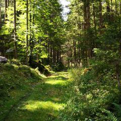 魔法森林用戶圖片