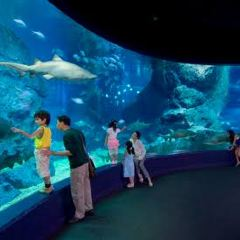 Sea Life Bangkok Ocean World User Photo