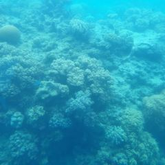 Moore Outer Reef User Photo