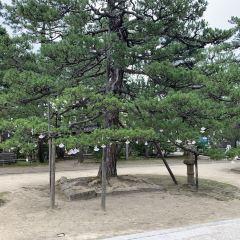 Chionji User Photo