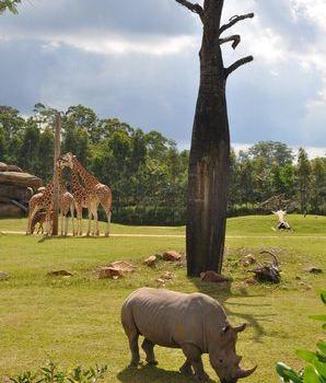 Australia Zoo1