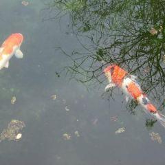 大石養魚場用戶圖片